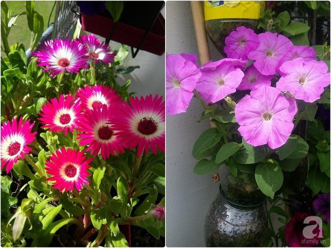 Ban công vỏn vẹn 6m² nhưng đẹp lung linh nhờ muôn sắc hoa do người vợ trẻ tự trồng - Ảnh 10.