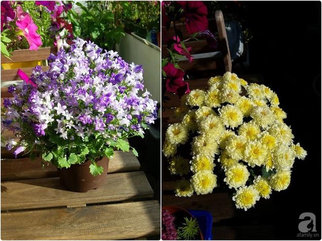 Ban công vỏn vẹn 6m² nhưng đẹp lung linh nhờ muôn sắc hoa do người vợ trẻ tự trồng - Ảnh 11.