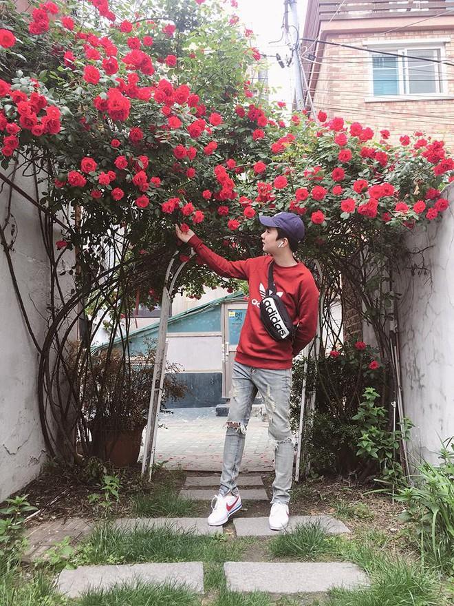 Mê đắm trước cổng nhà rực rỡ hoa hồng ở ngôi nhà thuê của chàng trai 9x - Ảnh 1.
