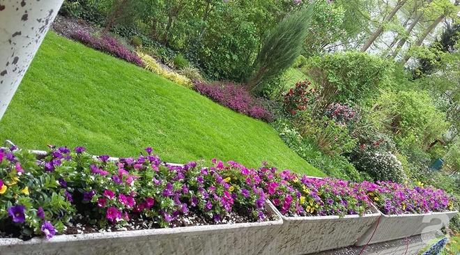 """Khu vườn đẹp như mơ của người chồng dành cả """"thanh xuân"""" đi tìm các loại hoa hiếm về tặng vợ - Ảnh 3."""