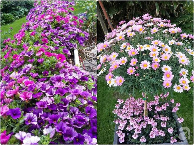 """Khu vườn đẹp như mơ của người chồng dành cả """"thanh xuân"""" đi tìm các loại hoa hiếm về tặng vợ - Ảnh 4."""