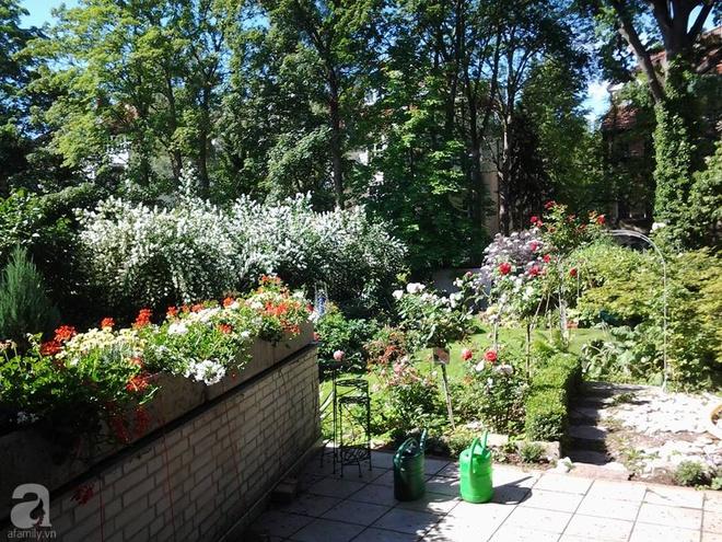 """Khu vườn đẹp như mơ của người chồng dành cả """"thanh xuân"""" đi tìm các loại hoa hiếm về tặng vợ - Ảnh 5."""