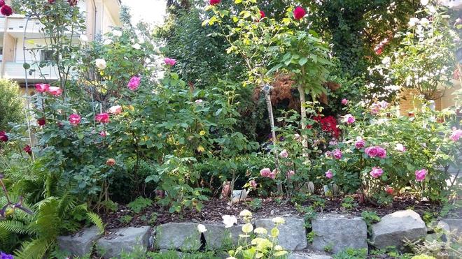 """Khu vườn đẹp như mơ của người chồng dành cả """"thanh xuân"""" đi tìm các loại hoa hiếm về tặng vợ - Ảnh 6."""