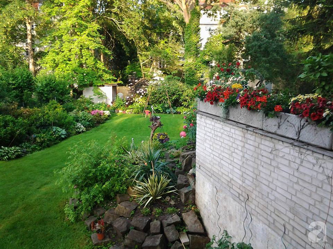 """Khu vườn đẹp như mơ của người chồng dành cả """"thanh xuân"""" đi tìm các loại hoa hiếm về tặng vợ - Ảnh 10."""