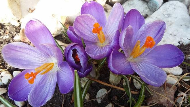 """Khu vườn đẹp như mơ của người chồng dành cả """"thanh xuân"""" đi tìm các loại hoa hiếm về tặng vợ - Ảnh 20."""