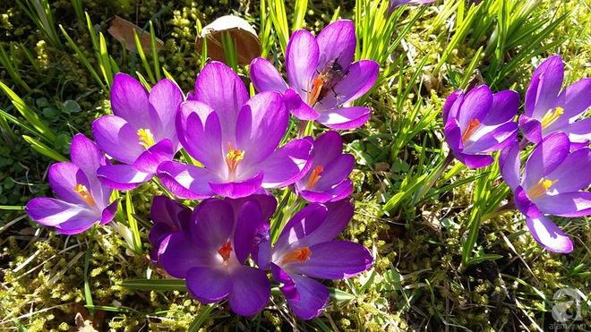 """Khu vườn đẹp như mơ của người chồng dành cả """"thanh xuân"""" đi tìm các loại hoa hiếm về tặng vợ - Ảnh 21."""