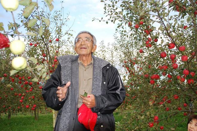 Vườn táo đẹp như cổ tích của cụ ông người Nhật dành tâm huyết suốt 11 năm chăm sóc - Ảnh 1.