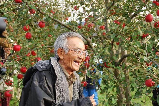 Vườn táo đẹp như cổ tích của cụ ông người Nhật dành tâm huyết suốt 11 năm chăm sóc - Ảnh 2.