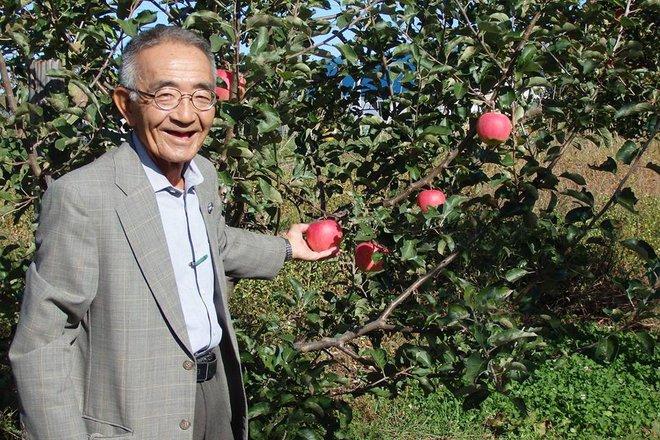 Vườn táo đẹp như cổ tích của cụ ông người Nhật dành tâm huyết suốt 11 năm chăm sóc - Ảnh 3.