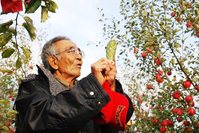 Vườn táo đẹp như cổ tích của cụ ông người Nhật dành tâm huyết suốt 11 năm chăm sóc - Ảnh 4.