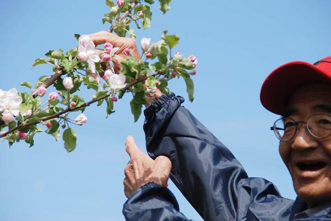 Vườn táo đẹp như cổ tích của cụ ông người Nhật dành tâm huyết suốt 11 năm chăm sóc - Ảnh 11.