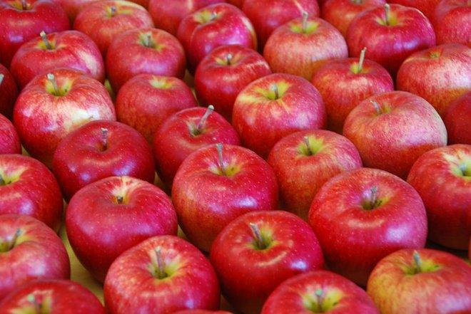 Vườn táo đẹp như cổ tích của cụ ông người Nhật dành tâm huyết suốt 11 năm chăm sóc - Ảnh 14.