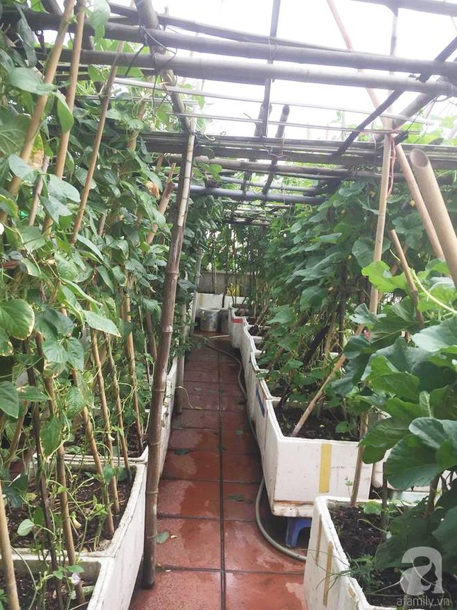 Nông trại trên cao với bạt ngàn rau sạch và quả ngọt bà cất công trồng để đảm bảo sức khỏe cho cháu yêu - Ảnh 2.