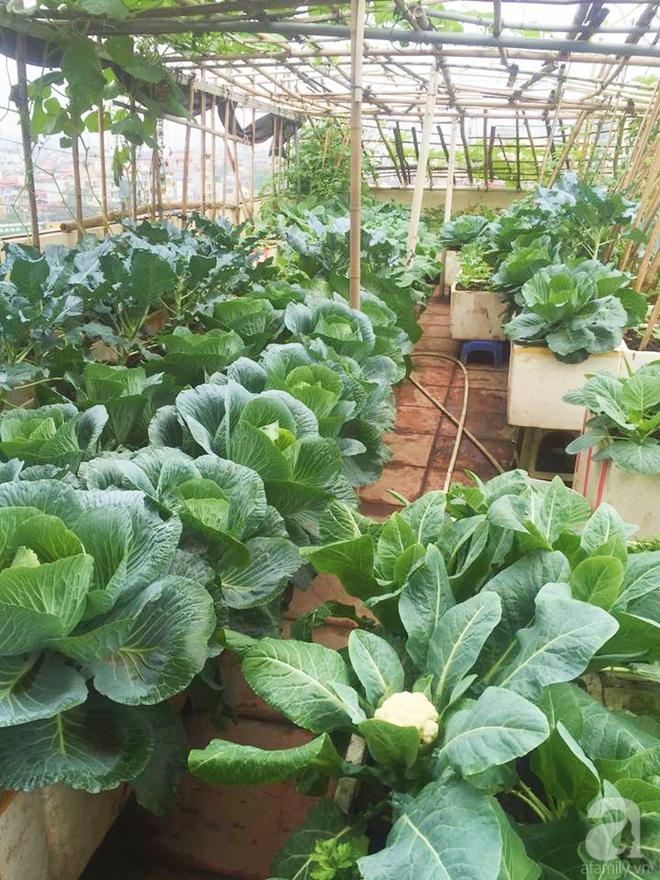 Nông trại trên cao với bạt ngàn rau sạch và quả ngọt bà cất công trồng để đảm bảo sức khỏe cho cháu yêu - Ảnh 3.
