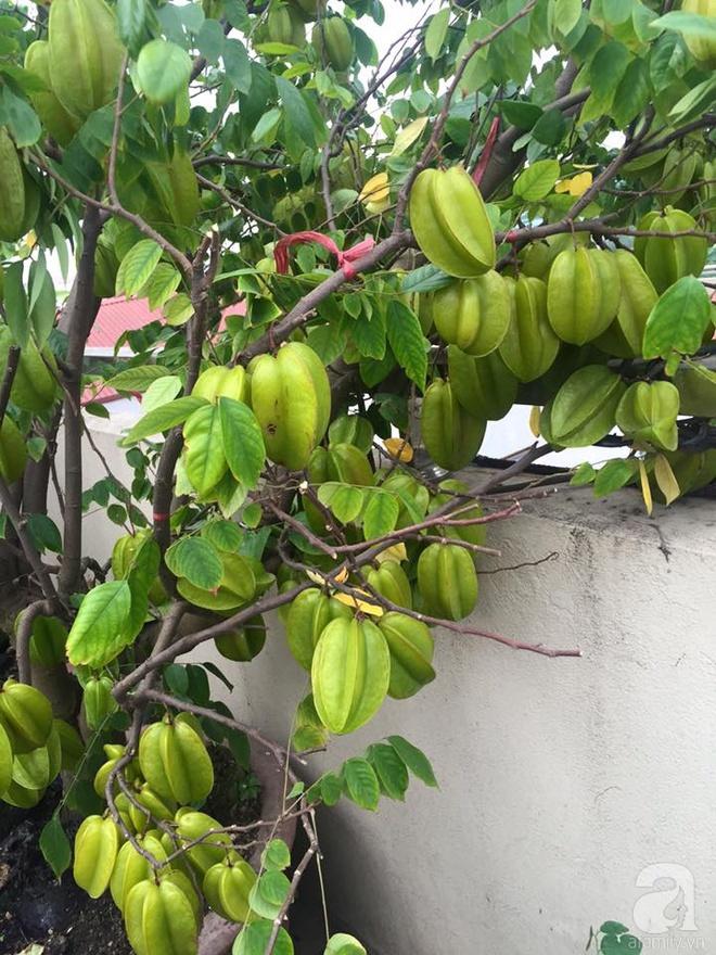 Nông trại trên cao với bạt ngàn rau sạch và quả ngọt bà cất công trồng để đảm bảo sức khỏe cho cháu yêu - Ảnh 7.