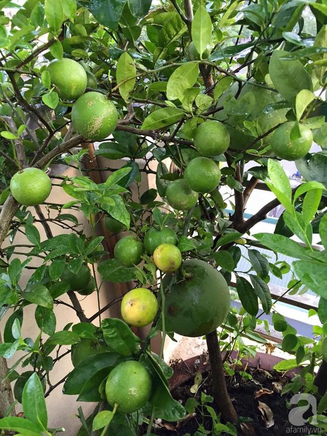 Nông trại trên cao với bạt ngàn rau sạch và quả ngọt bà cất công trồng để đảm bảo sức khỏe cho cháu yêu - Ảnh 10.
