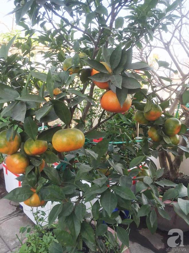 Nông trại trên cao với bạt ngàn rau sạch và quả ngọt bà cất công trồng để đảm bảo sức khỏe cho cháu yêu - Ảnh 13.