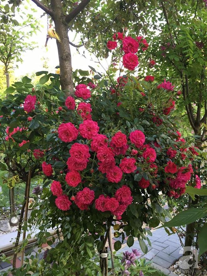 Ngắm khu vườn rộng hơn nghìn m² rực rỡ khoe hương sắc của người đàn ông Việt dành hết tâm huyết để chăm bón - Ảnh 15.