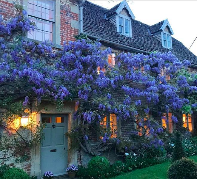 Những ngôi nhà có mặt tiền đẹp hút mắt nhờ trồng cây xanh - Ảnh 1.