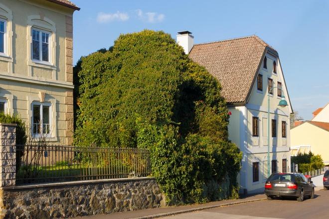 Những ngôi nhà có mặt tiền đẹp hút mắt nhờ trồng cây xanh - Ảnh 3.