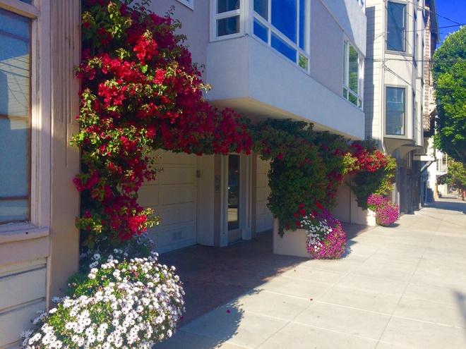 Những ngôi nhà có mặt tiền đẹp hút mắt nhờ trồng cây xanh - Ảnh 4.