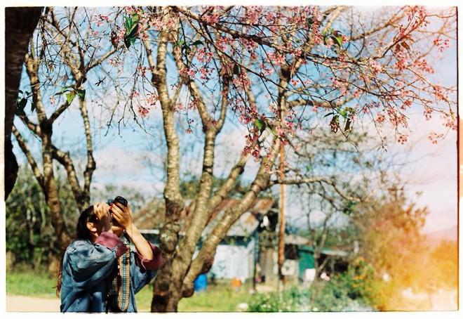 Lên Đà Lạt mùa này tuyệt như đi Nhật, có mai anh đào nở rộ rực hồng, trời lại rất xanh trong - Ảnh 2.