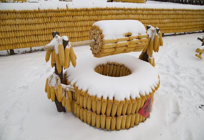 Bỏ tiền mua 30.000 bắp ngô về đổ đầy sân, người nông dân khiến mọi người choáng váng khi thấy kết quả - Ảnh 12.