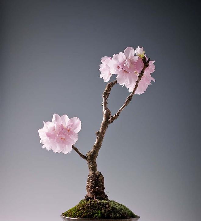 Ngất ngây với 15 chậu hoa bonsai mini siêu đẹp để trang trí nhà dịp Tết - Ảnh 11.