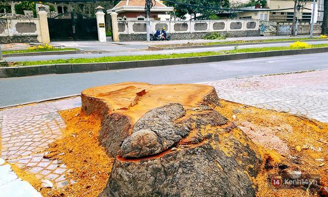 Chùm ảnh: Người Sài Gòn đặt hoa hồng trên gốc những hàng cây xanh bị đốn hạ ở đuờng Tôn Đức Thắng - Ảnh 13.