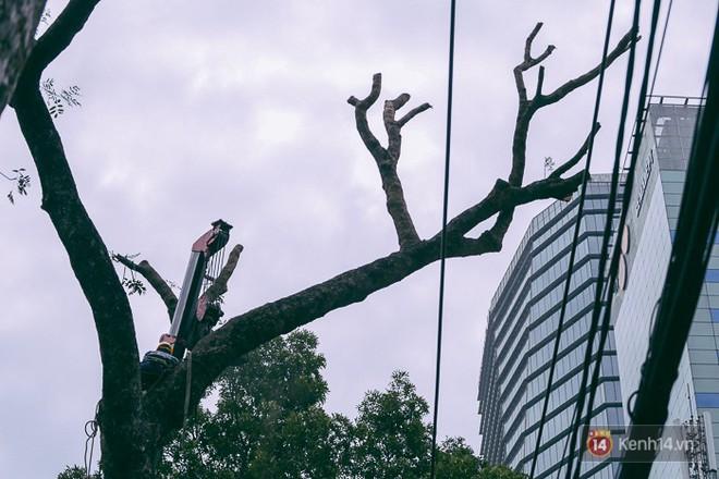 Chùm ảnh: Người Sài Gòn đặt hoa hồng trên gốc những hàng cây xanh bị đốn hạ ở đuờng Tôn Đức Thắng - Ảnh 17.