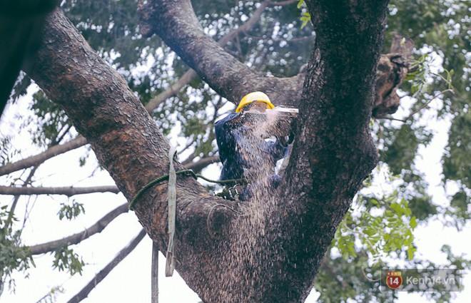 Chùm ảnh: Người Sài Gòn đặt hoa hồng trên gốc những hàng cây xanh bị đốn hạ ở đuờng Tôn Đức Thắng - Ảnh 4.