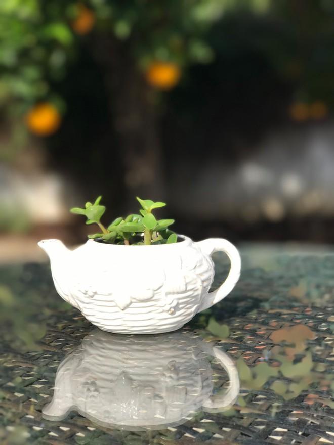 Gợi ý trồng cây, trồng hoa siêu ngọt ngào trong bộ ấm chén, bạn đã sẵn sàng để đón mùa xuân? - Ảnh 7.