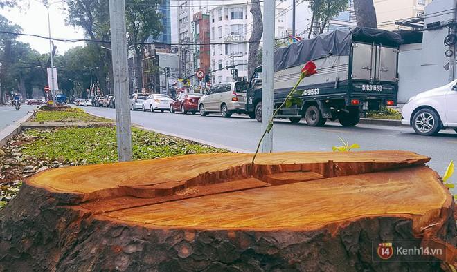 Chùm ảnh: Người Sài Gòn đặt hoa hồng trên gốc những hàng cây xanh bị đốn hạ ở đuờng Tôn Đức Thắng - Ảnh 9.