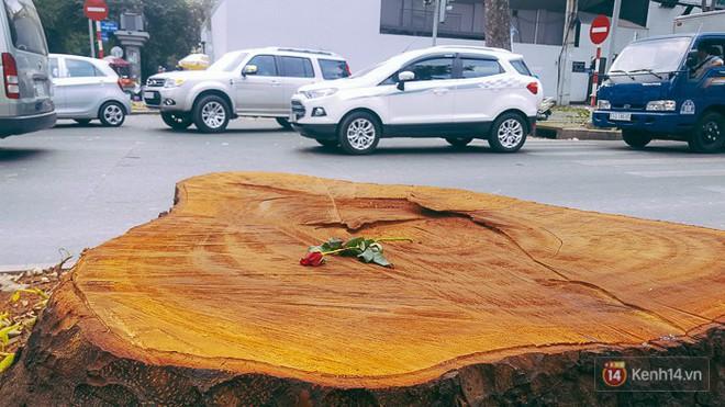 Chùm ảnh: Người Sài Gòn đặt hoa hồng trên gốc những hàng cây xanh bị đốn hạ ở đuờng Tôn Đức Thắng - Ảnh 10.