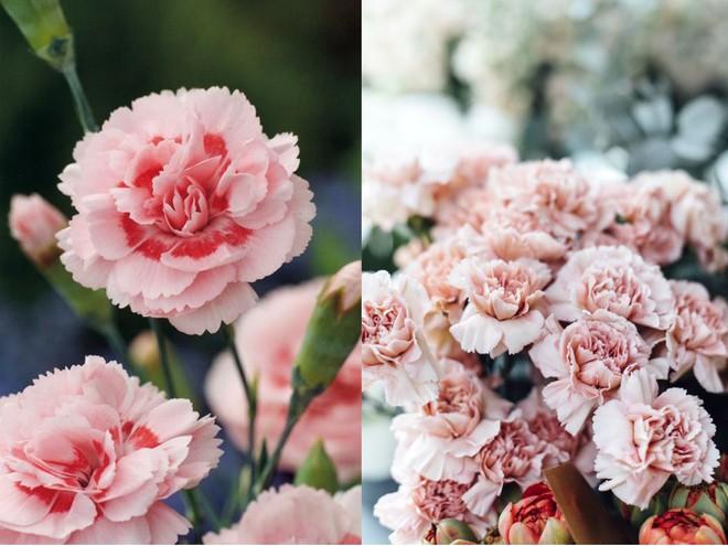 Chọn hạt giống trồng hoa để không khí Xuân ngập tràn cả nhà - Ảnh 1.