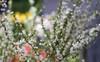 4 loại hoa nhập khẩu đắt tiền đang được chị em săn lùng ráo riết để trưng Tết 2018