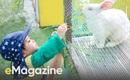 Ghé thăm trường mầm non sinh thái đầu tiên tại Hà Nội, nơi các con tự khám phá cuộc sống bằng tất cả giác quan