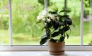 10 loại cây cảnh thanh lọc không khí trong phòng ngủ, giúp bạn ngủ ngon hơn mà lại rất dễ chăm sóc