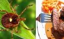 Giới chuyên gia cảnh báo bọ ngôi sao cô đơn có thể nguy hiểm tính mạng con người chỉ với một vết cắn