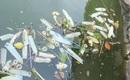 Hồ Tây bất ngờ xuất hiện hàng trăm chiếc bao cao su đã qua sử dụng nổi lềnh bềnh