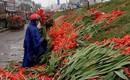 Hà Nội: Hoa tươi rớt giá, chỉ bằng 1/10 so với trước Tết, dân buôn vứt đổ đống tại chợ Quảng An