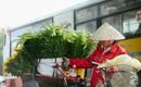 Hoa loa kèn trắng tinh khôi đã về trên phố Hà Nội, chị em nhanh tay mua kẻo hết mùa