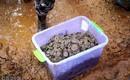 Bí ẩn 5,6 tấn tiền xu được phát hiện tại Trung Quốc