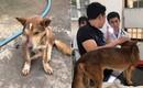 Vợ chồng trẻ ở Sài Gòn vượt cả trăm km, đưa chú chó bị chém đứt đôi mặt đi chữa trị