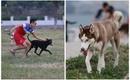 Hà Nội: Chó không rọ mõm vẫn tung tăng tại các khu vực công cộng khiến nhiều người e sợ