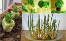 """8 loại rau củ có khả năng """"tái sinh"""" giúp gia đình có rau ăn quanh năm suốt tháng"""