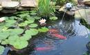 Ý tưởng làm hồ và thác nước ngoài trời cho sân vườn đẹp lung linh