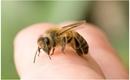 Bé gái 11 tuổi bị ong đốt tử vong