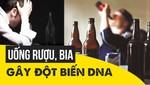 Uống rượu, bia gây đột biến DNA