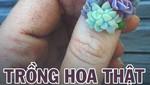 Trồng hoa thật trên...móng tay?